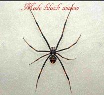 spider203